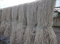 モズク収穫後の網の行方・・