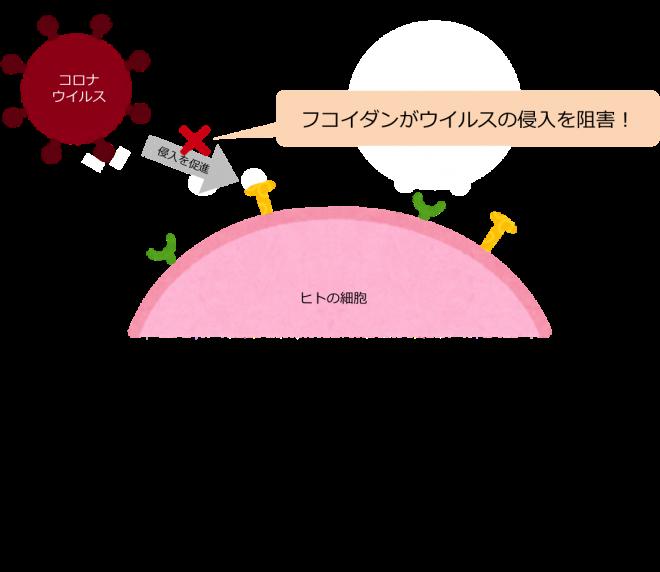 コロナ予防の図_ヘパラン硫酸