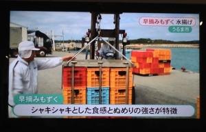 TV・新聞で紹介されました!【沖縄県産「早摘みもずく」収穫開始】